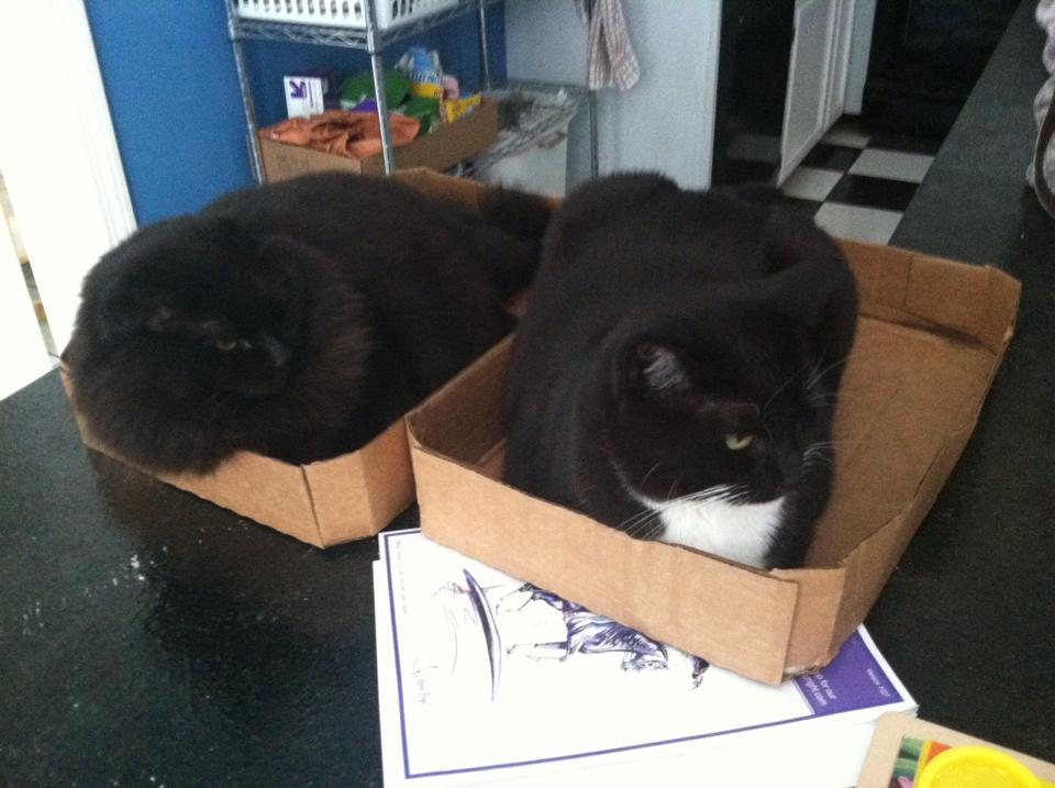 Pepsi and Pickles love sitting in boxes
